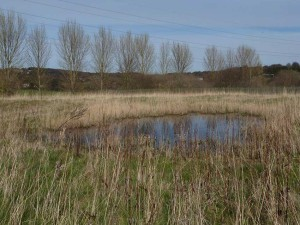 15-Poplar-Field-added-to-land-managed-by-reserve-March-2015