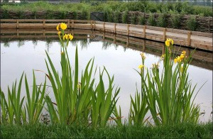 5-Education-pond-completed-June-2008