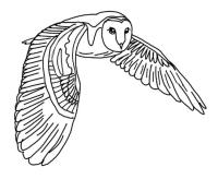 th_owl