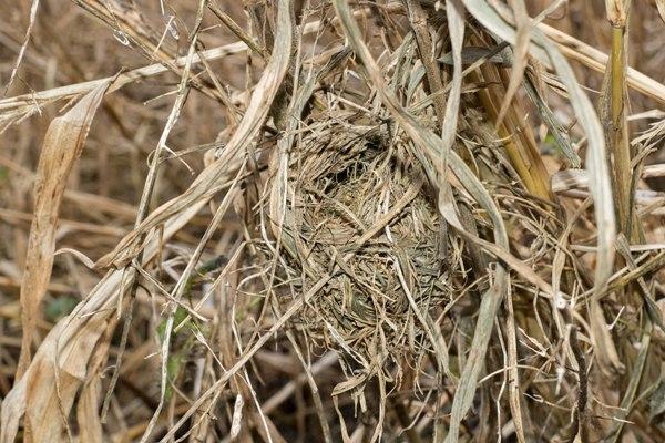 HM Nest5 Feb 18
